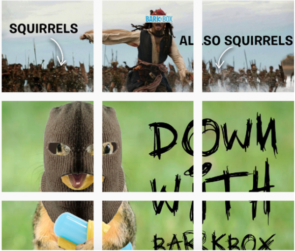 Barkbox Squirrel Day Takeover